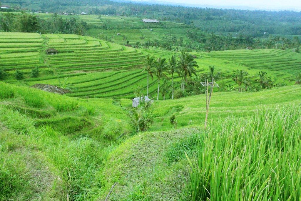 Tanah Lot Subak Tour   Jatiluwih Bali Water Irrigation Tours  Bali Tourist Destinations: 48 BALI TOUR JATILUWIH