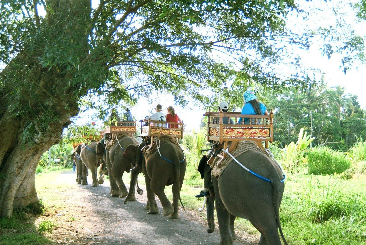 Bali Elephant Camp | Group Safari Ride