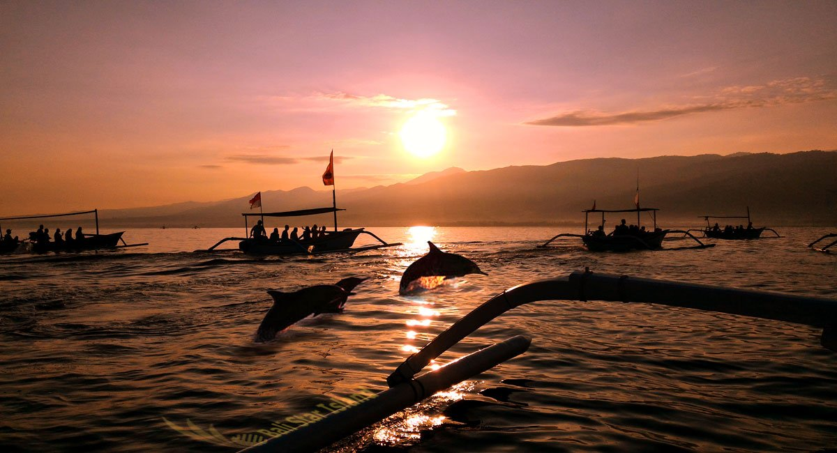 Bali Island Dolphin Tours