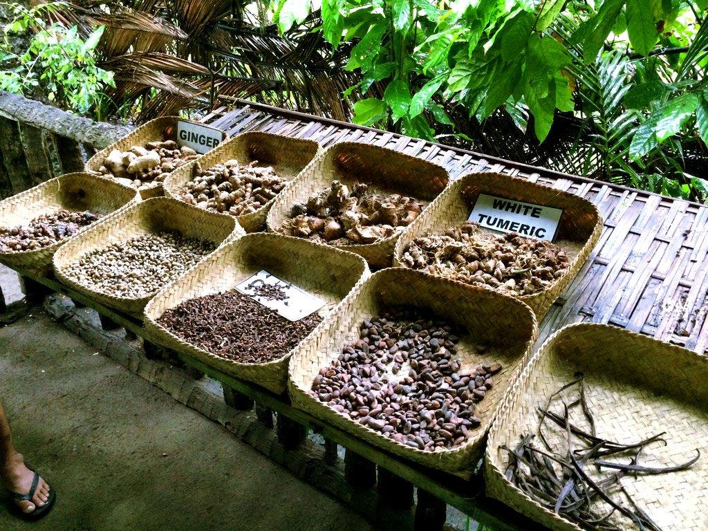 Kopi Luwak Plantation - Ubud, Bali - Six In Seoul  Kopi Luwak Coffee Plantations
