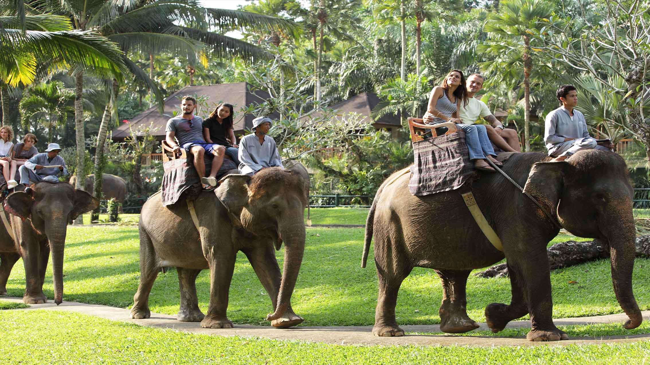 Bali Adventure Tours Elephant Safari Park