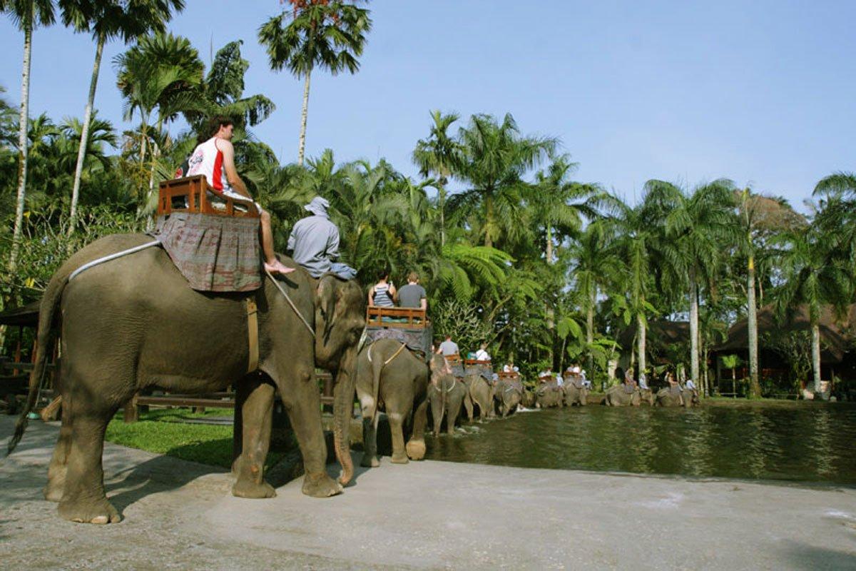 Elephant Bathing Pool | Bali Elephant Safari Park