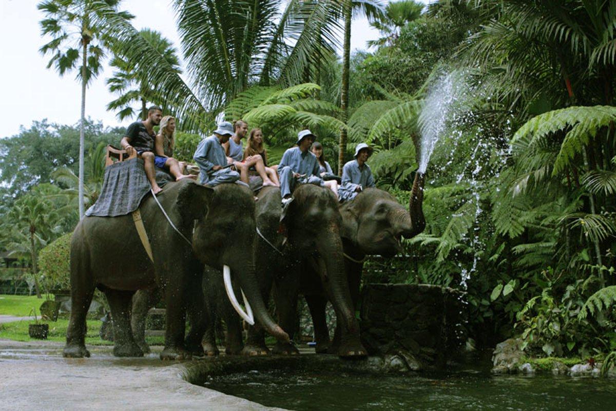 Bali Adventure Tours Elephant