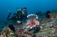 North Bali Hidden Beauty Diving Spot