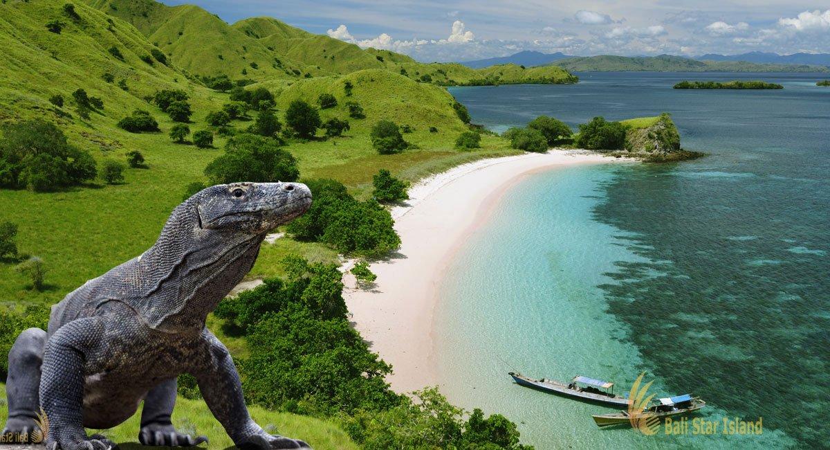 Komodo National Park | UNESCO World Heritages - Komodo Dragon  Komodo National...
